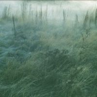 Et l'herbe redevient verte ...